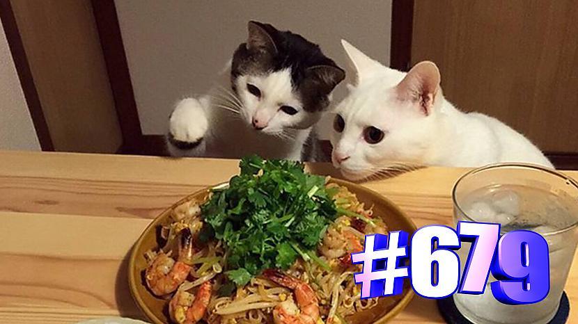 Autors: kotomaniabest Jauki kaķi un ēdiens (3. daļa) 👍🤣🐱
