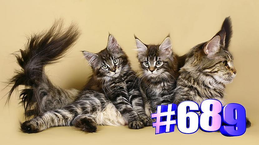Autors: kotomaniabest Skaisti kaķi 🐱😍💯😘